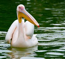 Pelican by clayjars