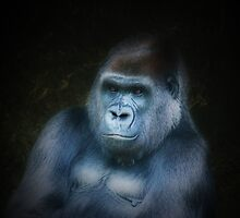 Gorilla Portrait by Kerry Duffy