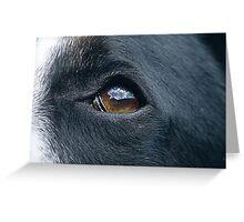 Dog Eye Greeting Card