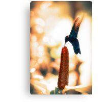 Caribbean Hummingbird Canvas Print