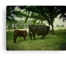 Calving Season Canvas Print