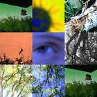 Through Emily's Eye by Karen Larsson