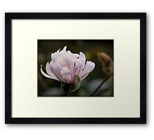 A textured Magnolia... Framed Print