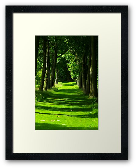 The Avenue - Thorp Perrow by Trevor Kersley