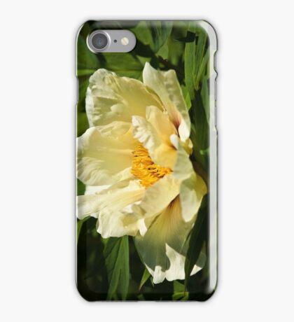 Yellow tree peony  iPhone Case/Skin