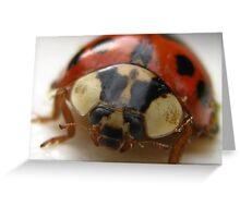 LadyBug Greeting Card