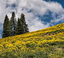 Field of Daisies by Bryan Peterson