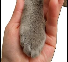Cat Paw In Hand by amanda metalcat dodds