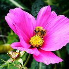 Busy as a bee by Connie  Danaher