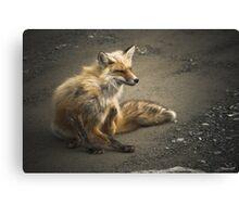 Itchy Fox Canvas Print