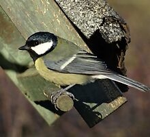 Coal Tit by Caroline Smalley