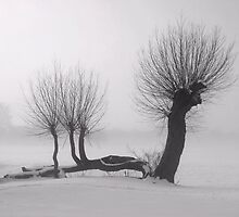 Weeping winter willow by miradorpictures