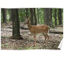 Deer in the woods Poster