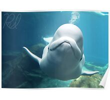 Locomotive Beluga Photographic Print Poster