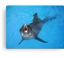 Astro Rough Toothed Dolphin Photographic Print Canvas Print