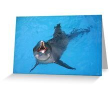 Astro Rough Toothed Dolphin Photographic Print Greeting Card