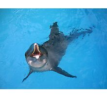 Astro Rough Toothed Dolphin Photographic Print Photographic Print