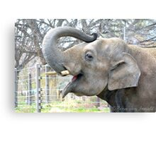 Thai Bodhi Elephant Photographic Print Canvas Print