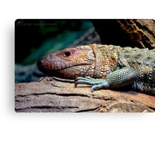 Dinosaur Reptile Photographic Print Canvas Print