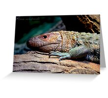 Dinosaur Reptile Photographic Print Greeting Card