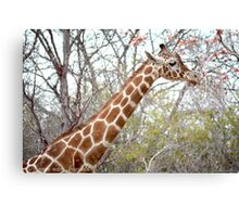 Autumn Giraffe Photographic Print Canvas Print