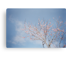 Spring Comes Canvas Print
