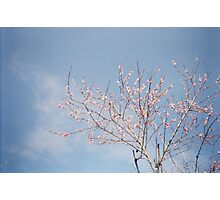 Spring Comes Photographic Print