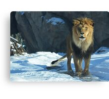 Huff Lion Photographic Print Canvas Print