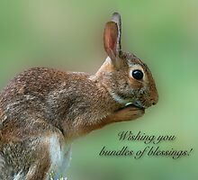 Wishing you bundles of blessings . . .  by Bonnie T.  Barry