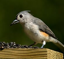 Tufted Titmouse at the Breakfast Table by Bonnie T.  Barry