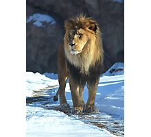 The Hunter Lion Photographic Print Photographic Print