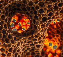 Honeycomb by Mark Bangert