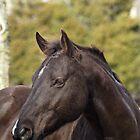 Equine Headshots by Samantha Dean
