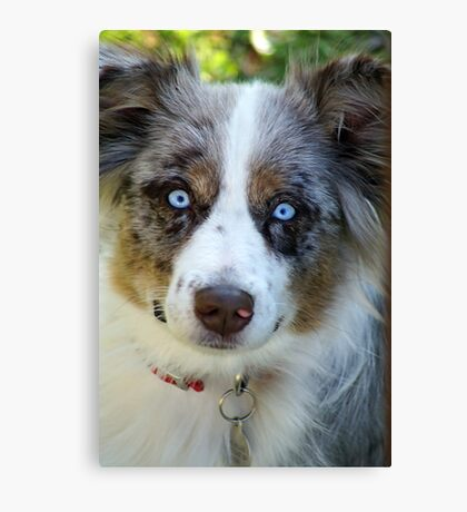 Ice Blue Eyes Canvas Print