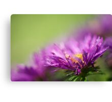Dewy Purple Asters Canvas Print