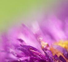 Dewy Purple Asters Sticker