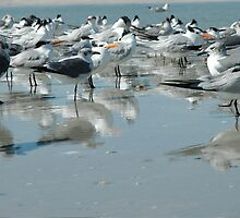 Bird's Eye View Gulls and Terns on the Beach by pjwuebker