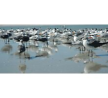 Bird's Eye View Gulls and Terns on the Beach Photographic Print