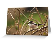 Long tailed tit  Greeting Card