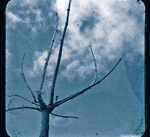 Blue Winter by Ross Jardine