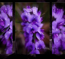 Purple Patch by Wendy  Slee