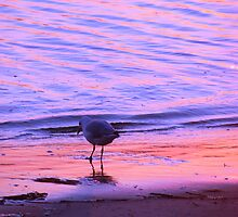 Purple-Orange Seagull Sunset by Martice
