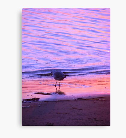 Purple-Orange Seagull Sunset Canvas Print