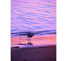 Purple-Orange Seagull Sunset Photographic Print