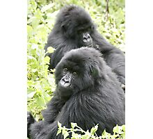 Mountain Gorillas II Photographic Print