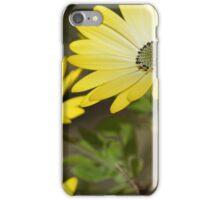 Cape Daisies 2 iPhone Case/Skin