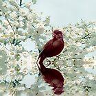 Spring call by shalisa