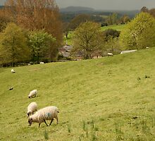 pastoral by jayview