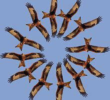 Red kite circles by BeardyGit