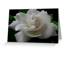 Gardenia Greeting Card